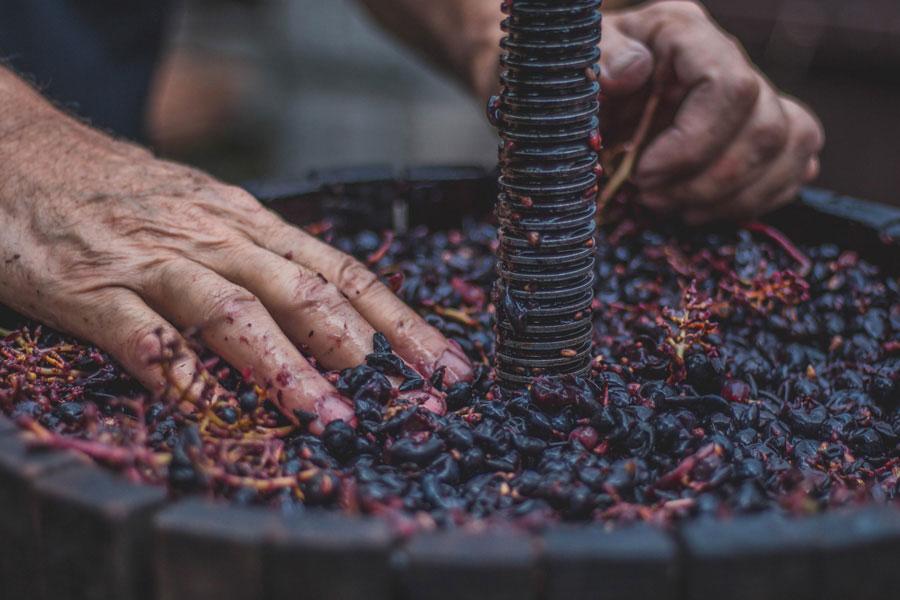 vendemmia salento vini pregiati